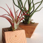 Amazing Air Plants Decor Ideas 04