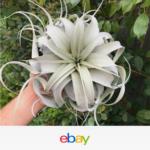 Amazing Air Plants Decor Ideas 07