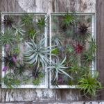 Amazing Air Plants Decor Ideas 08