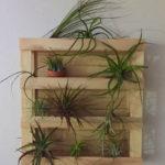 Amazing Air Plants Decor Ideas 12