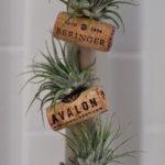 Amazing Air Plants Decor Ideas 13