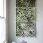 Amazing Air Plants Decor Ideas 20