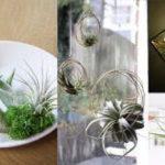Amazing Air Plants Decor Ideas 21