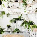 Amazing Air Plants Decor Ideas 25