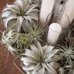 Amazing Air Plants Decor Ideas 29