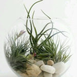 Amazing Air Plants Decor Ideas 40