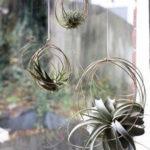 Amazing Air Plants Decor Ideas 41