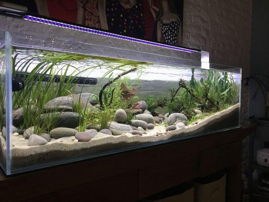 Amazing Aquarium Design Ideas Indoor Decorations 16