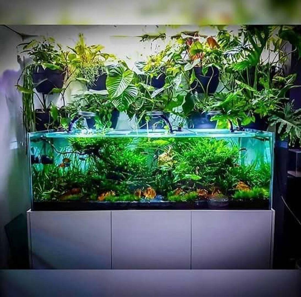 Amazing Aquarium Design Ideas Indoor Decorations 21