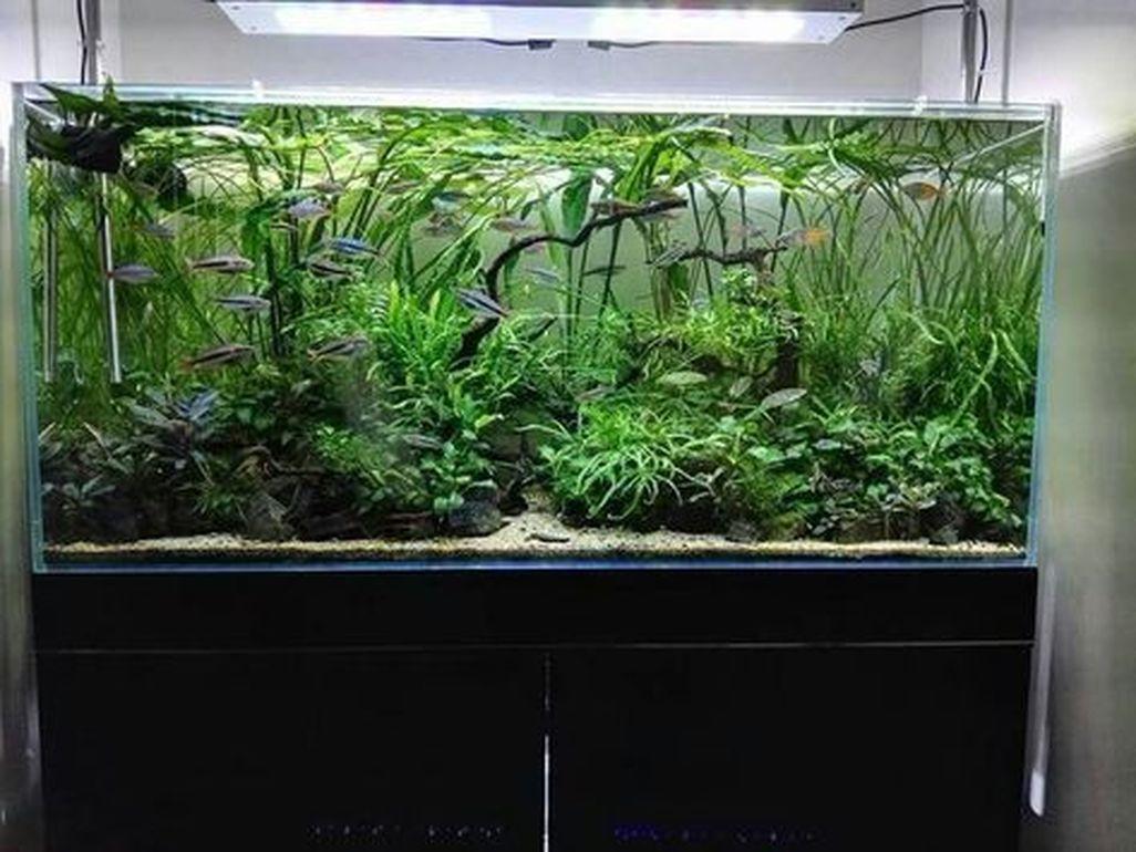Amazing Aquarium Design Ideas Indoor Decorations 24