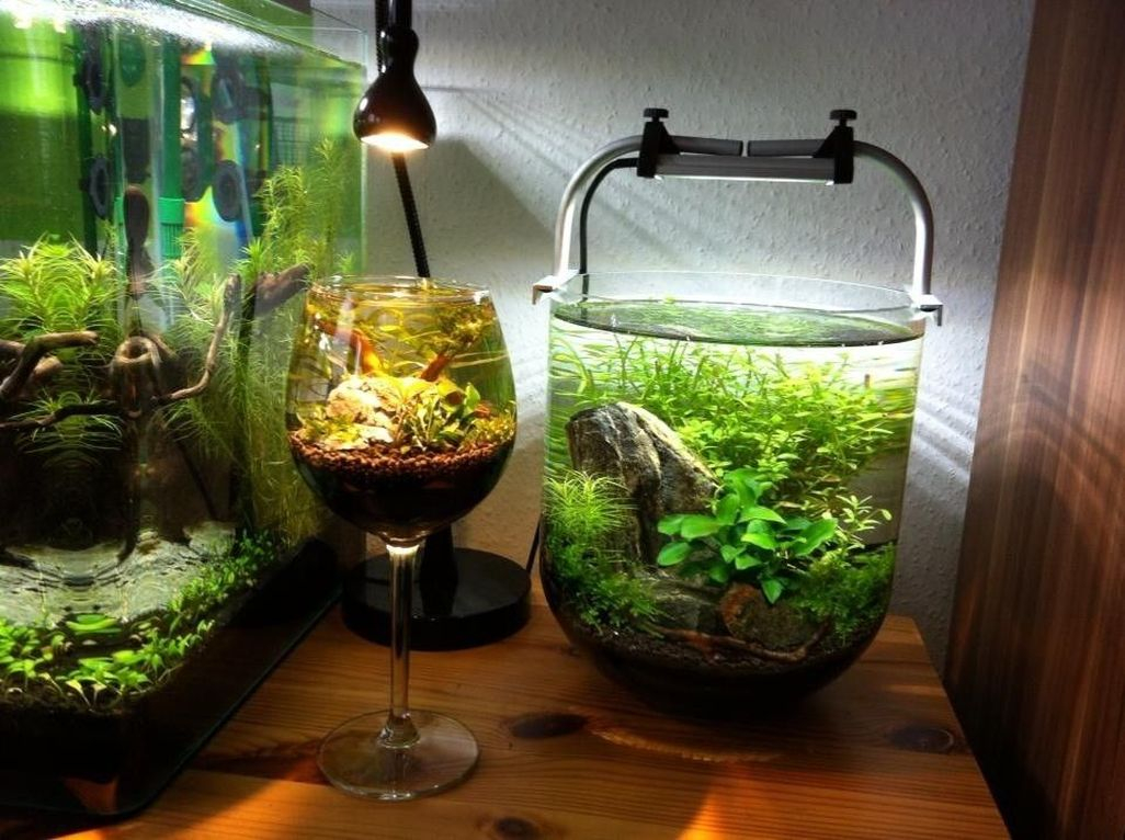 Amazing Aquarium Design Ideas Indoor Decorations 32