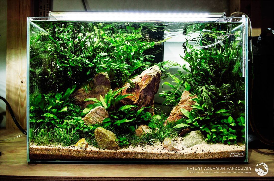 Amazing Aquarium Design Ideas Indoor Decorations 35