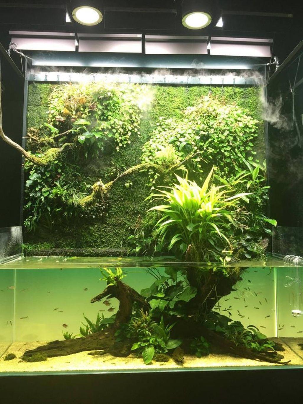 Amazing Aquarium Design Ideas Indoor Decorations 42