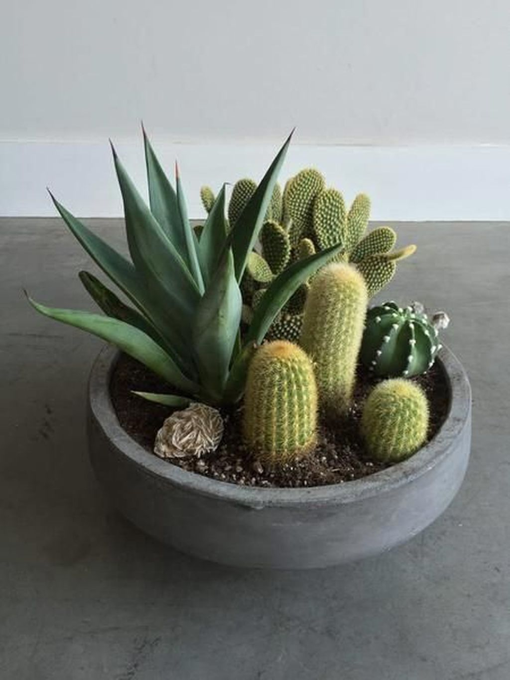 35 Lovely Small Cactus Ideas For Indoor Homishome